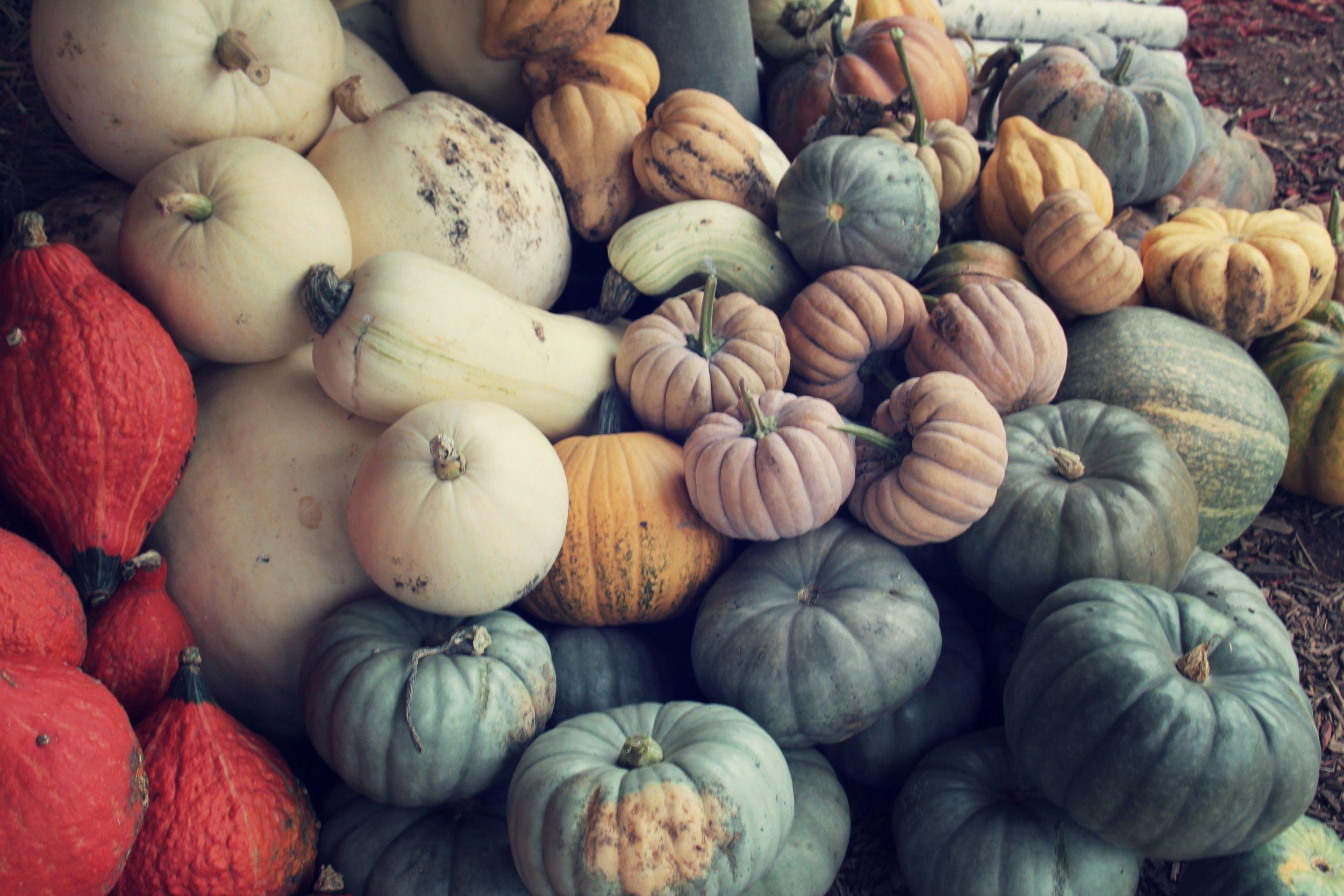 Pumpkins heirloom (1).jpg