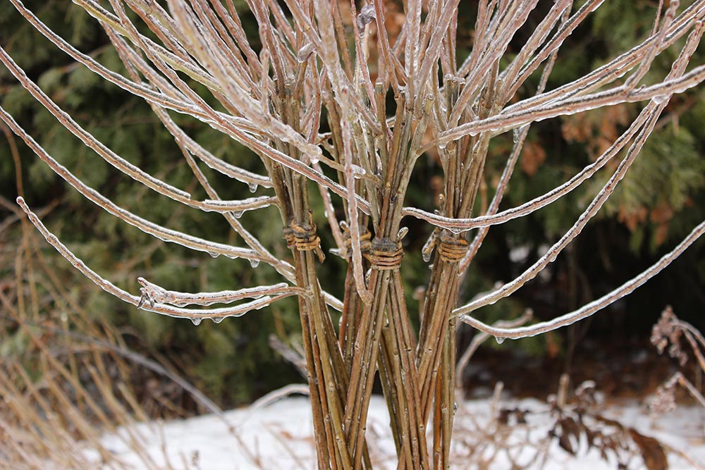 winterwillow1.jpg