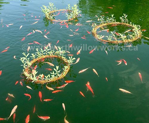 Pond Rings