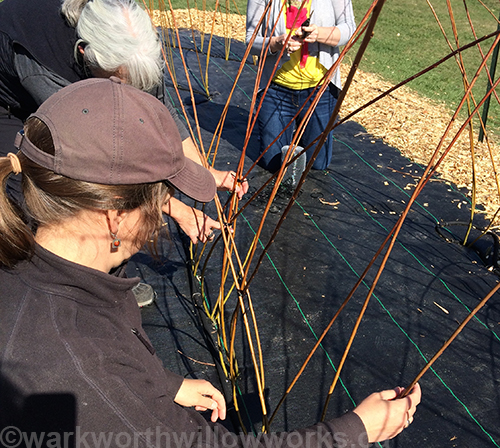 Living Willow Tunnel Demo Day at Warkworth Willow Works