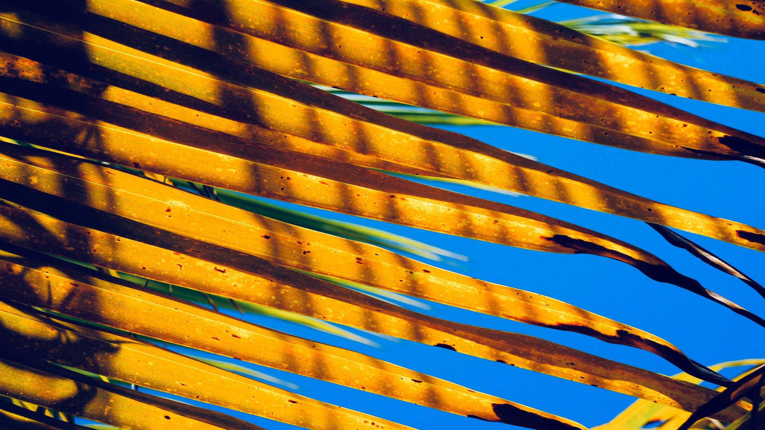 Honduras bailey-hall-709449-unsplash.jpg
