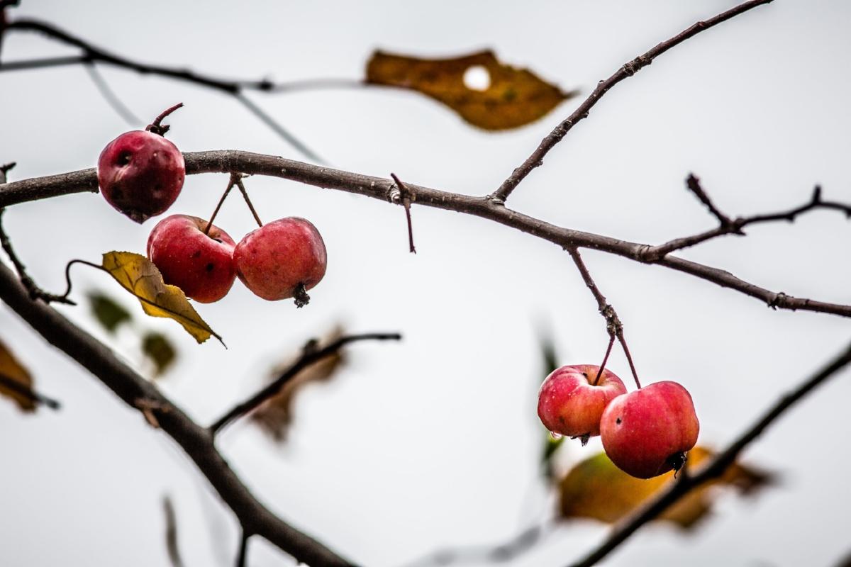Last Fruit-1.jpg