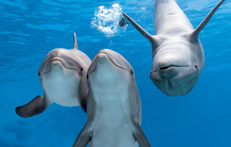 3-dolphins-blog.jpg