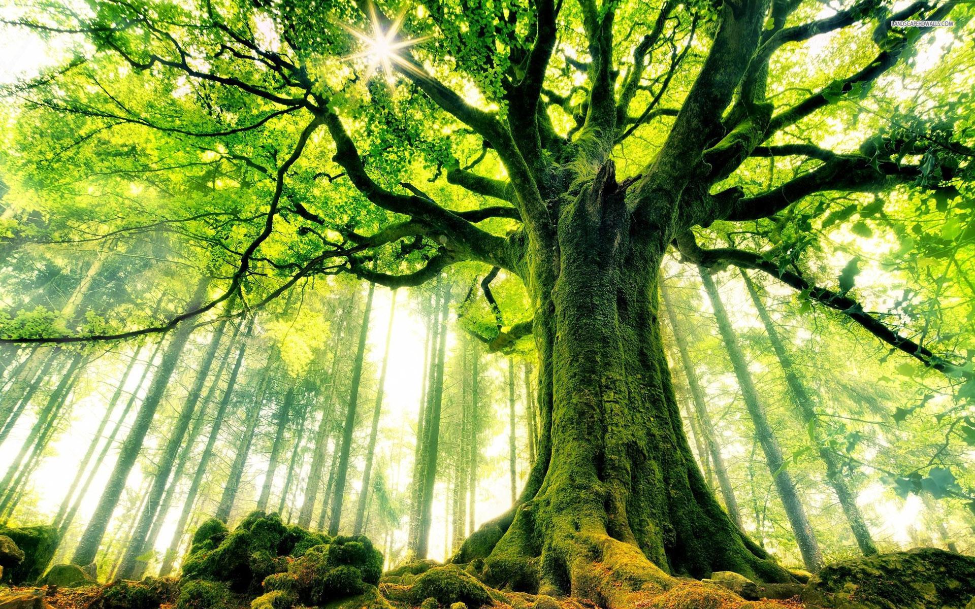 ways-to-ground-tree-blog-cover.jpg