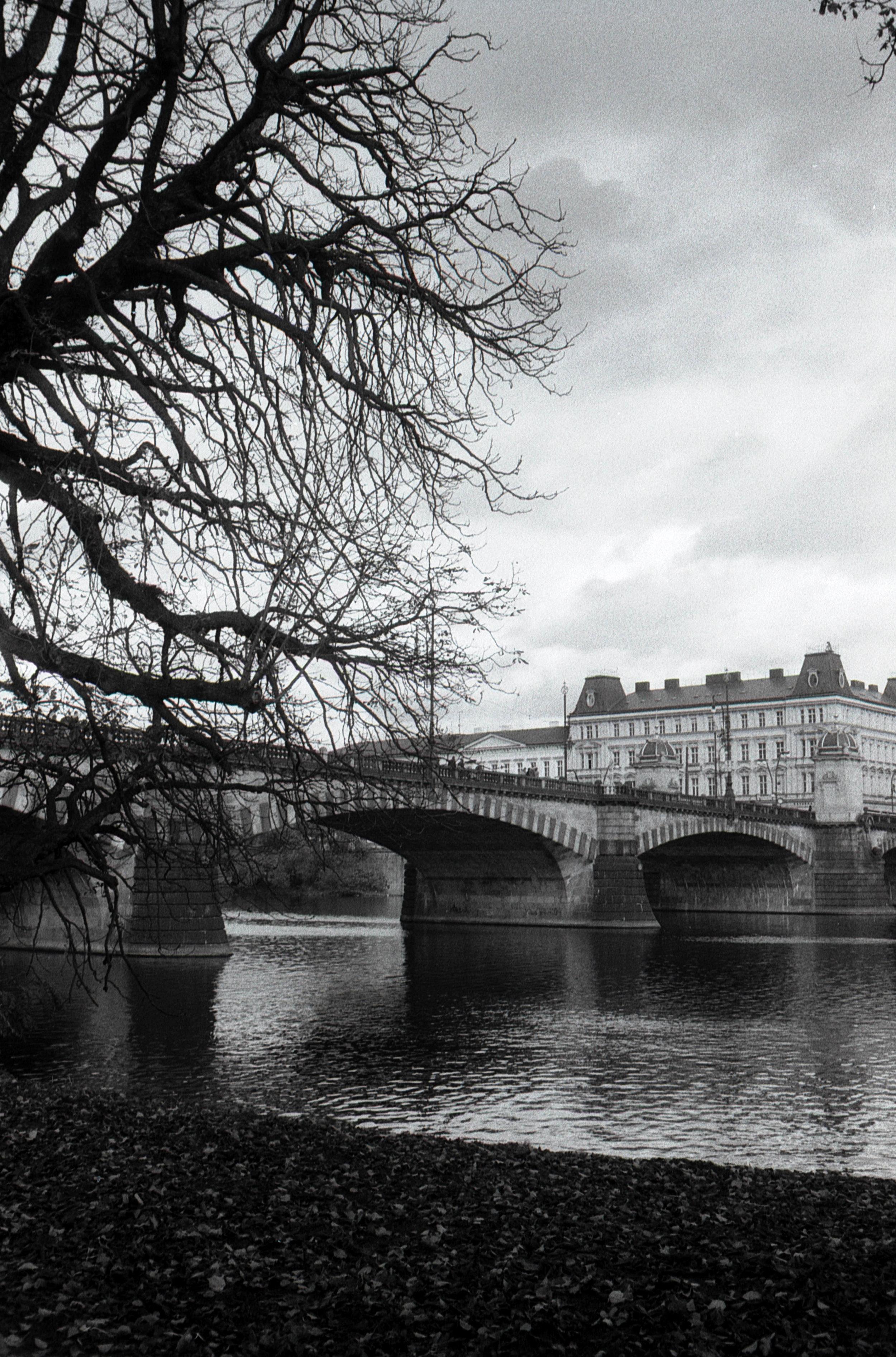 Bridge and tree