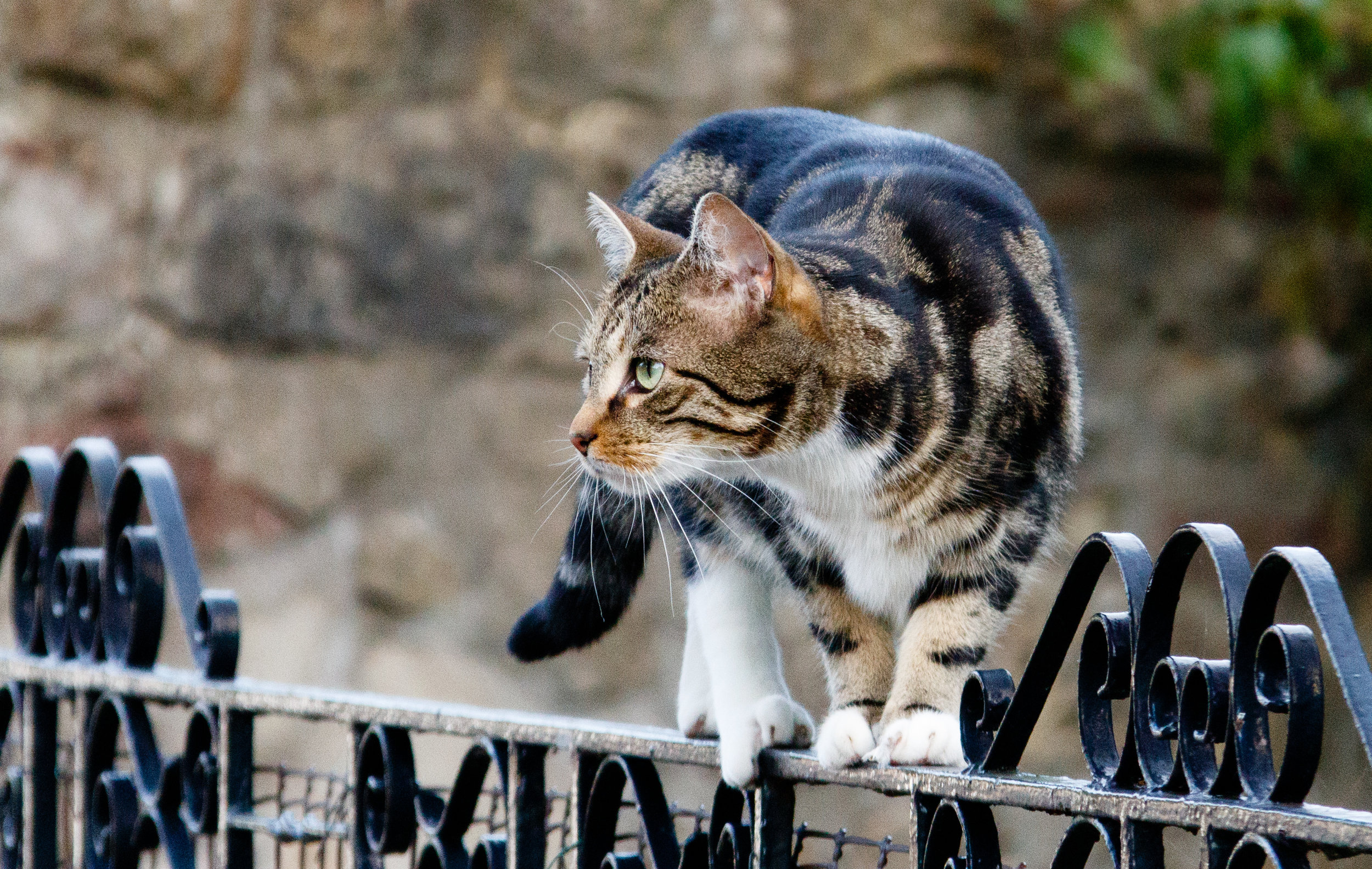 The cat looks like it's very well balanced. You might not say that if you'd seen how gingerly it was walking.