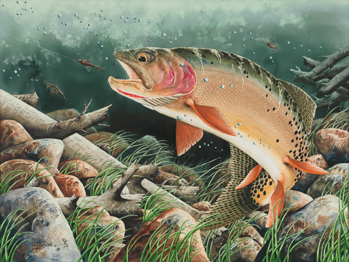 ptTrout_1_3F.jpg