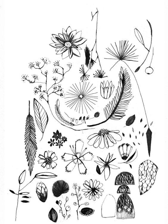 mariamontiel_flora3 dibujo.jpg
