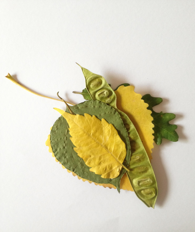 mariamontiel_coleccion hojas.jpg