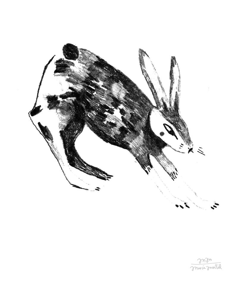 mariamontiel_conejo dibujo.jpg