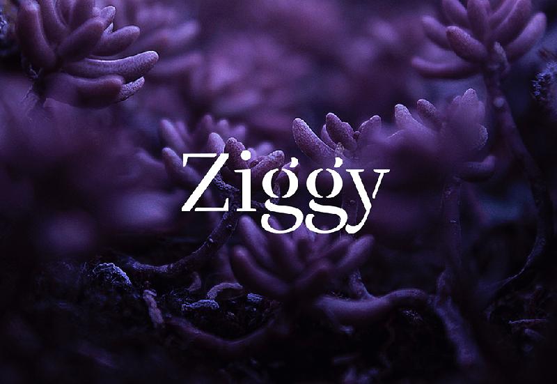 Ziggy_social_logo.png
