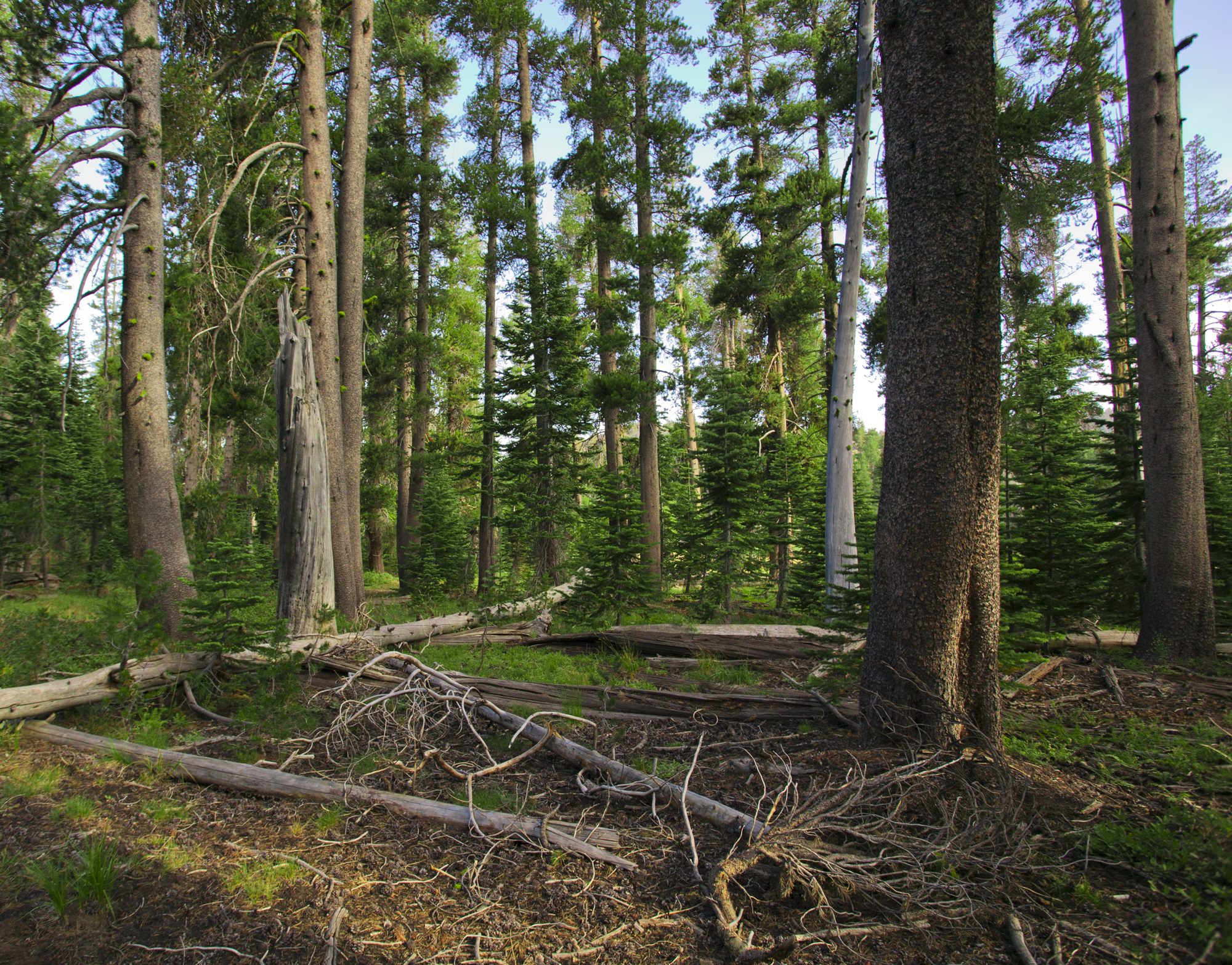 Forest Landscape..森林的风景