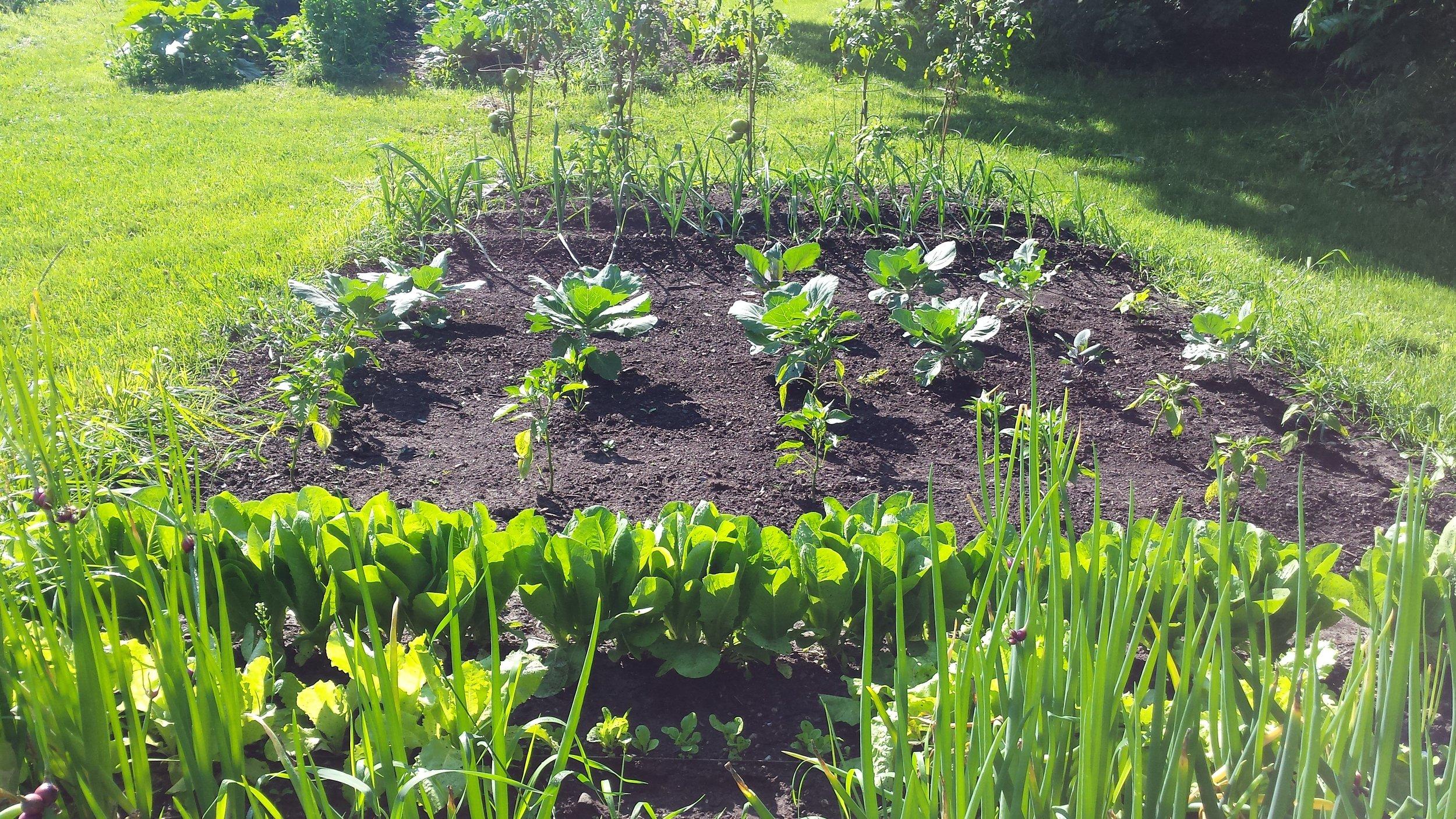 A flourishing garden on hospital grounds.