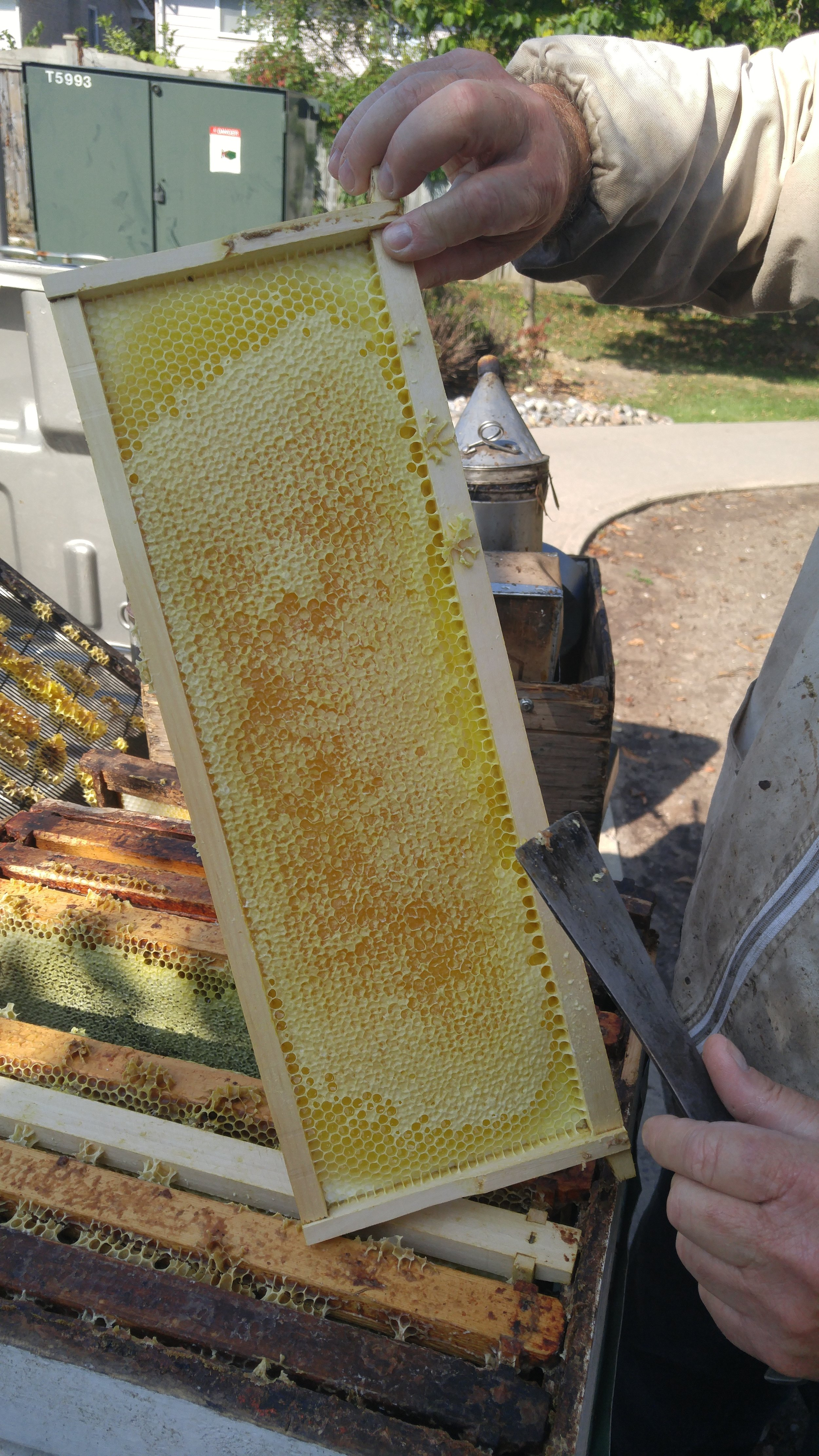 Some honey from harvesting our bee hive (Photo from Travis)
