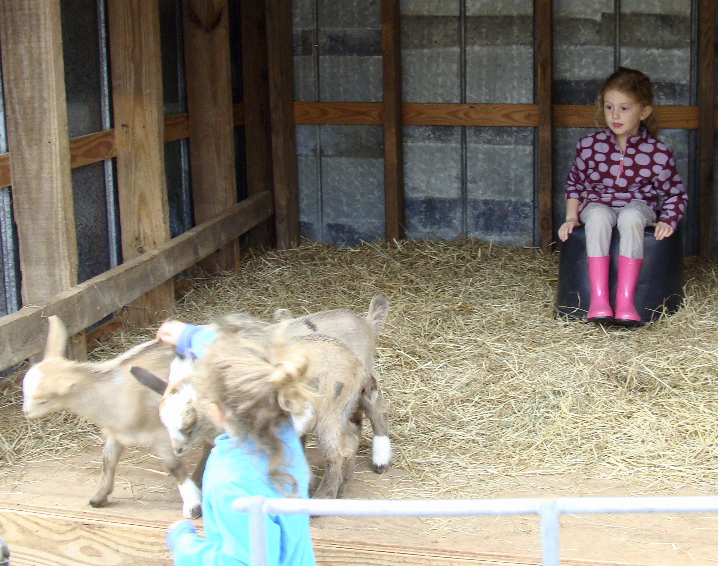 granddaughters and baby goats