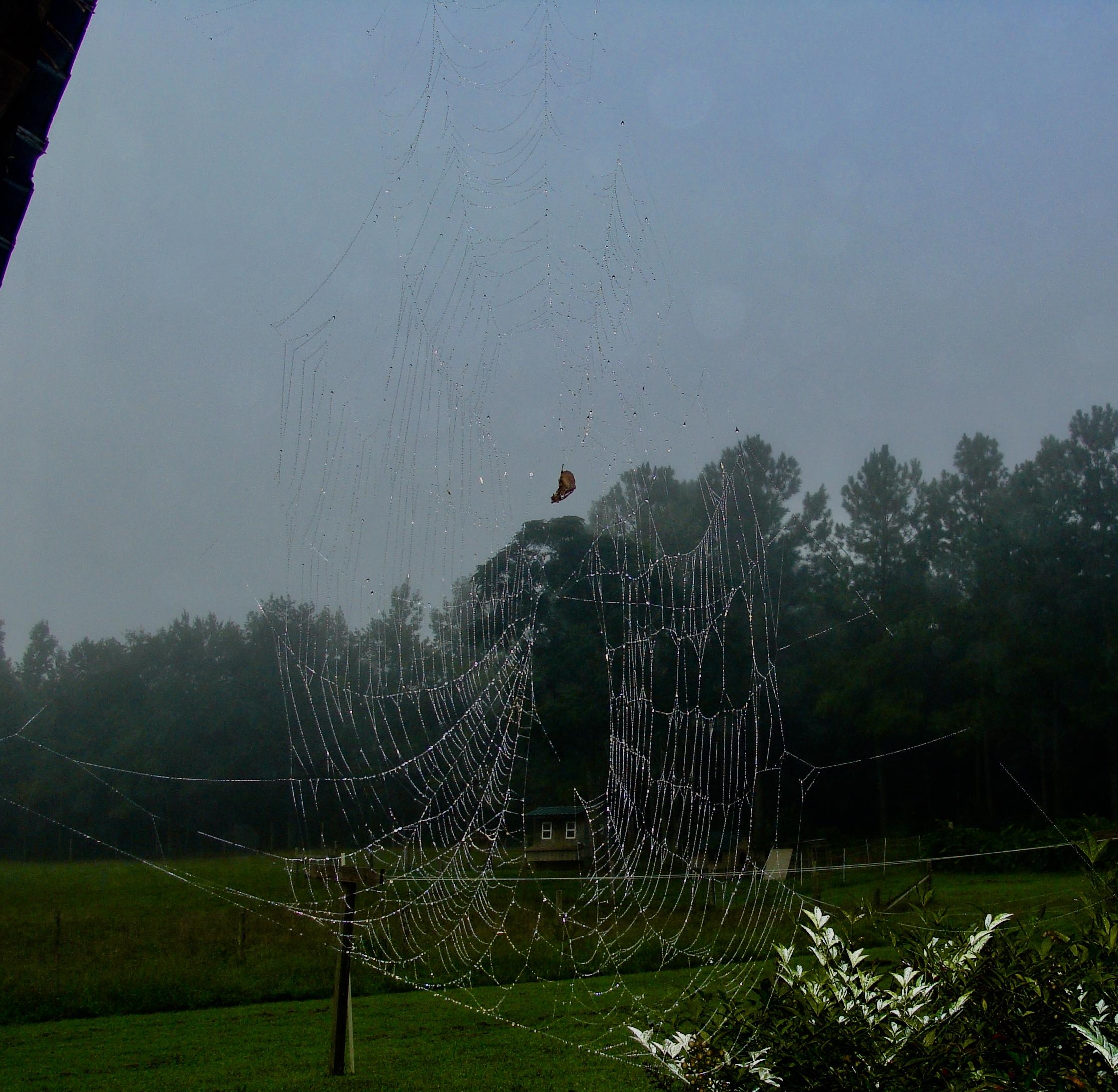 Spider Web Green Pastures Farm