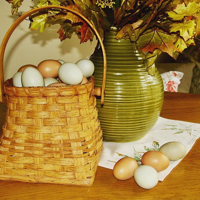Fresh eggs from our farm!  Yummy!!! Check out www.florafiber.live/blog 'Green Eggs' post🐥🐔