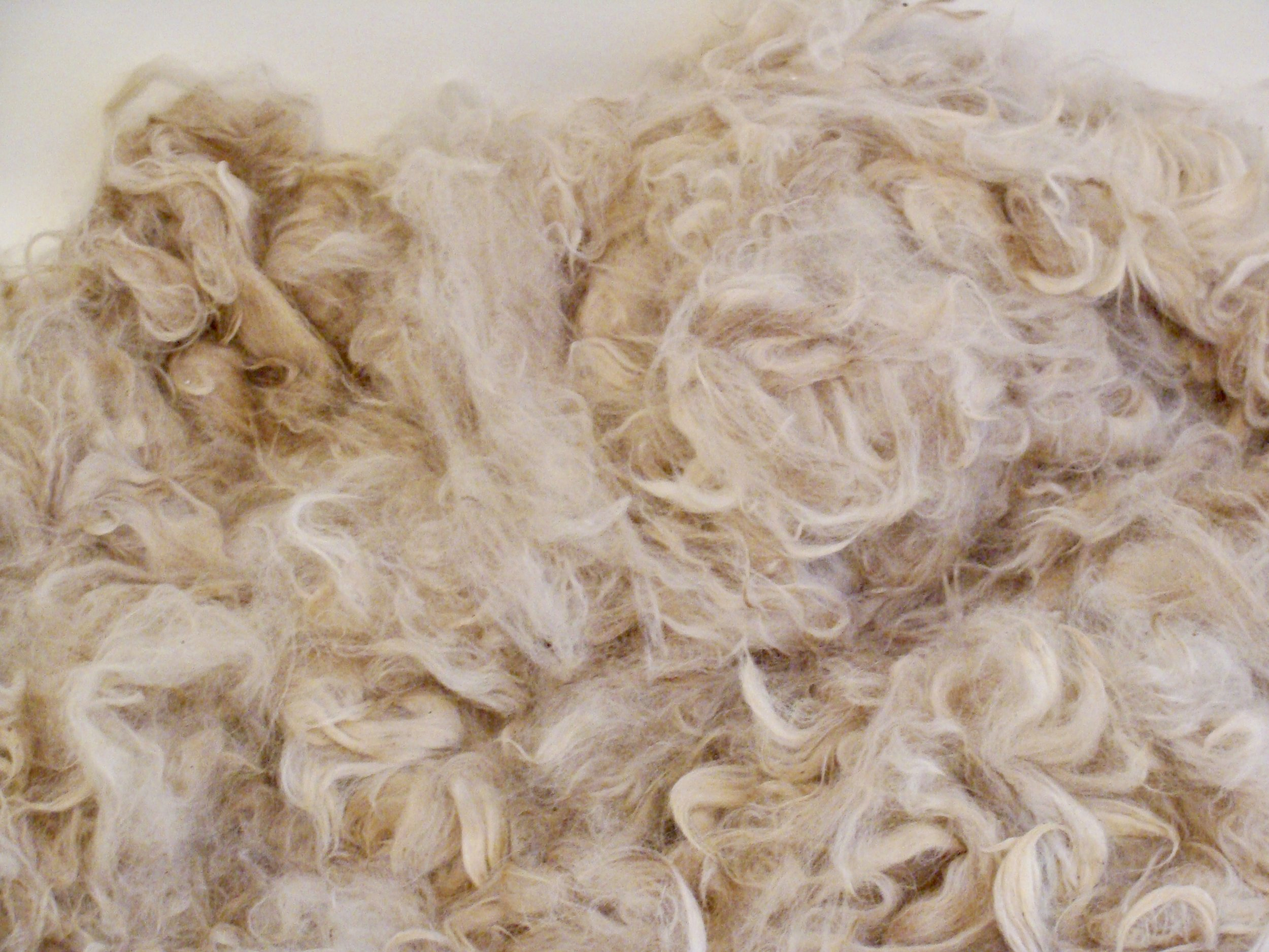 'Regalia' alpaca raw fleece