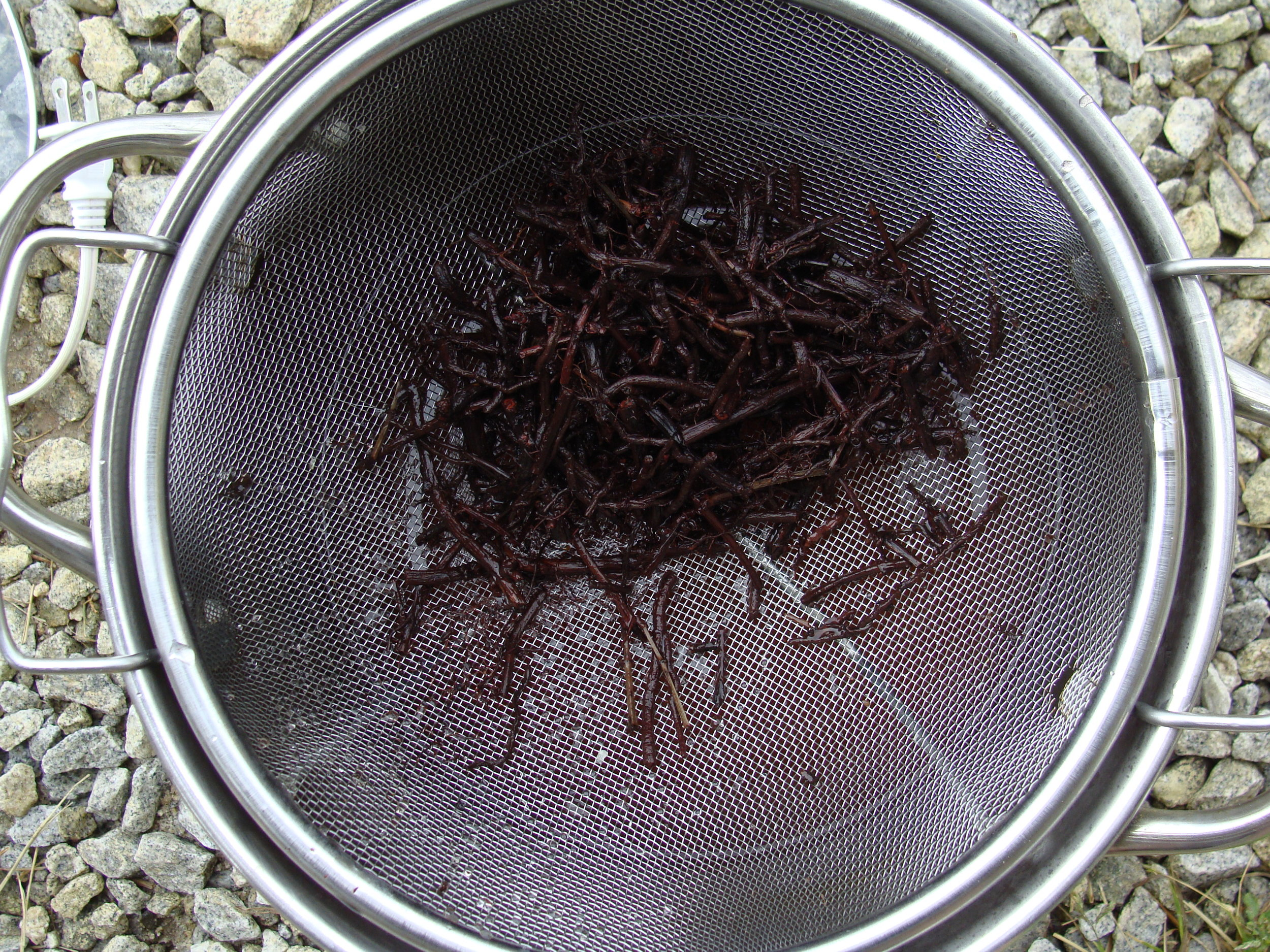madder root for natural dyeing