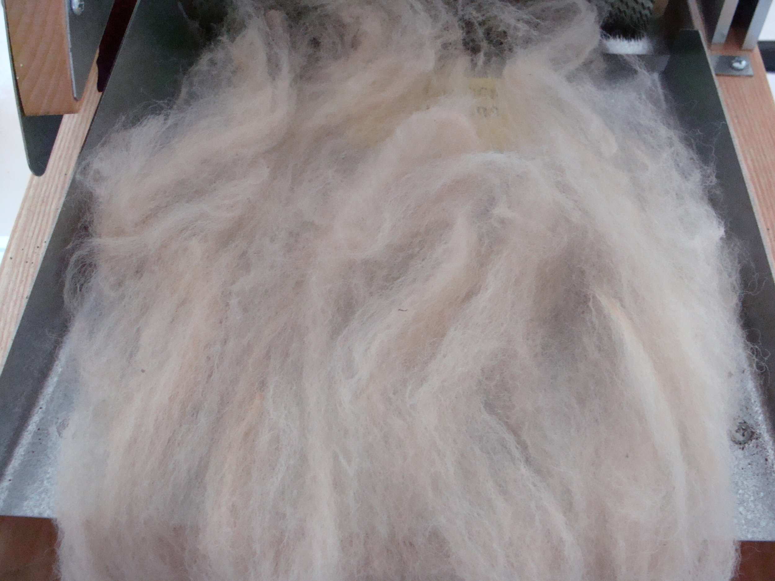 layer of carded whit alpaca on drum carder