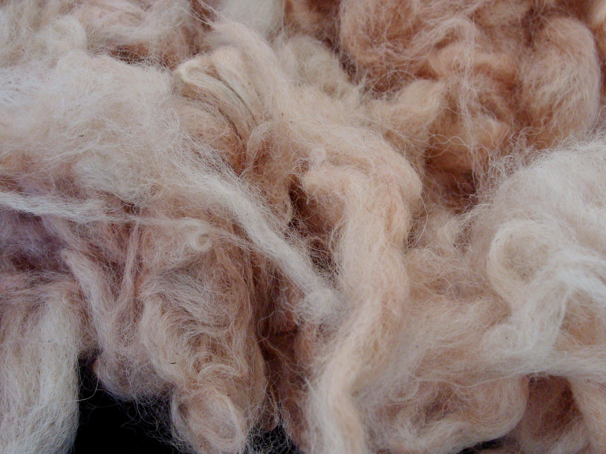 Madder natural dyed alpaca fleece