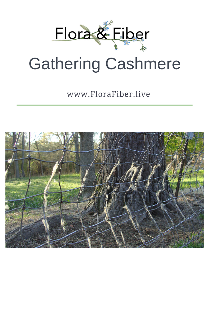 Gathering Cashmere.png