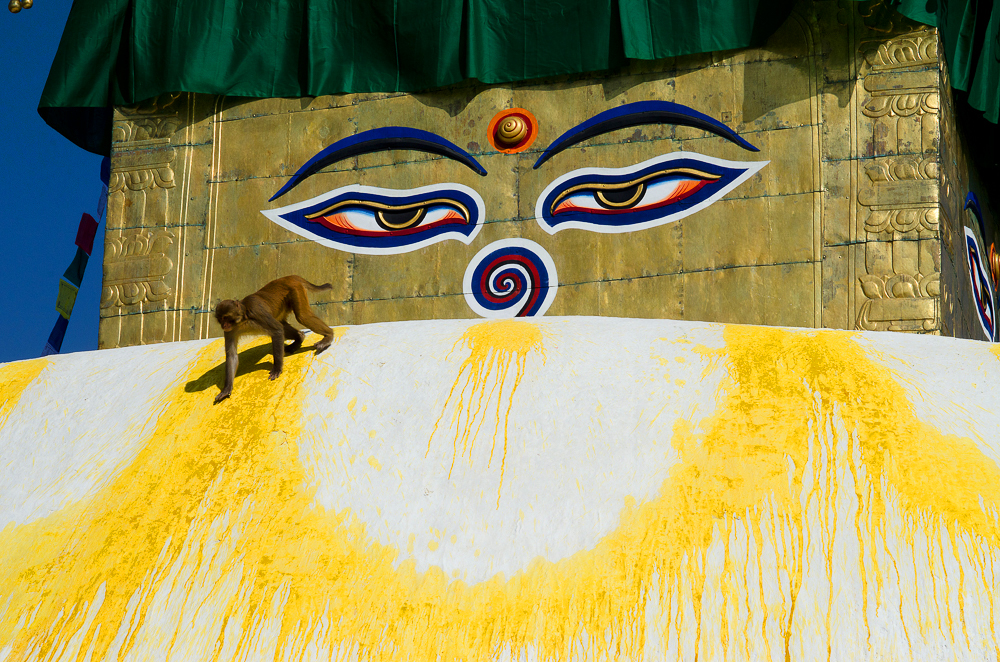 swayambhu eyes with monkey_NPL2536.jpg