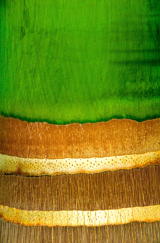 Palm Bark 2.jpg