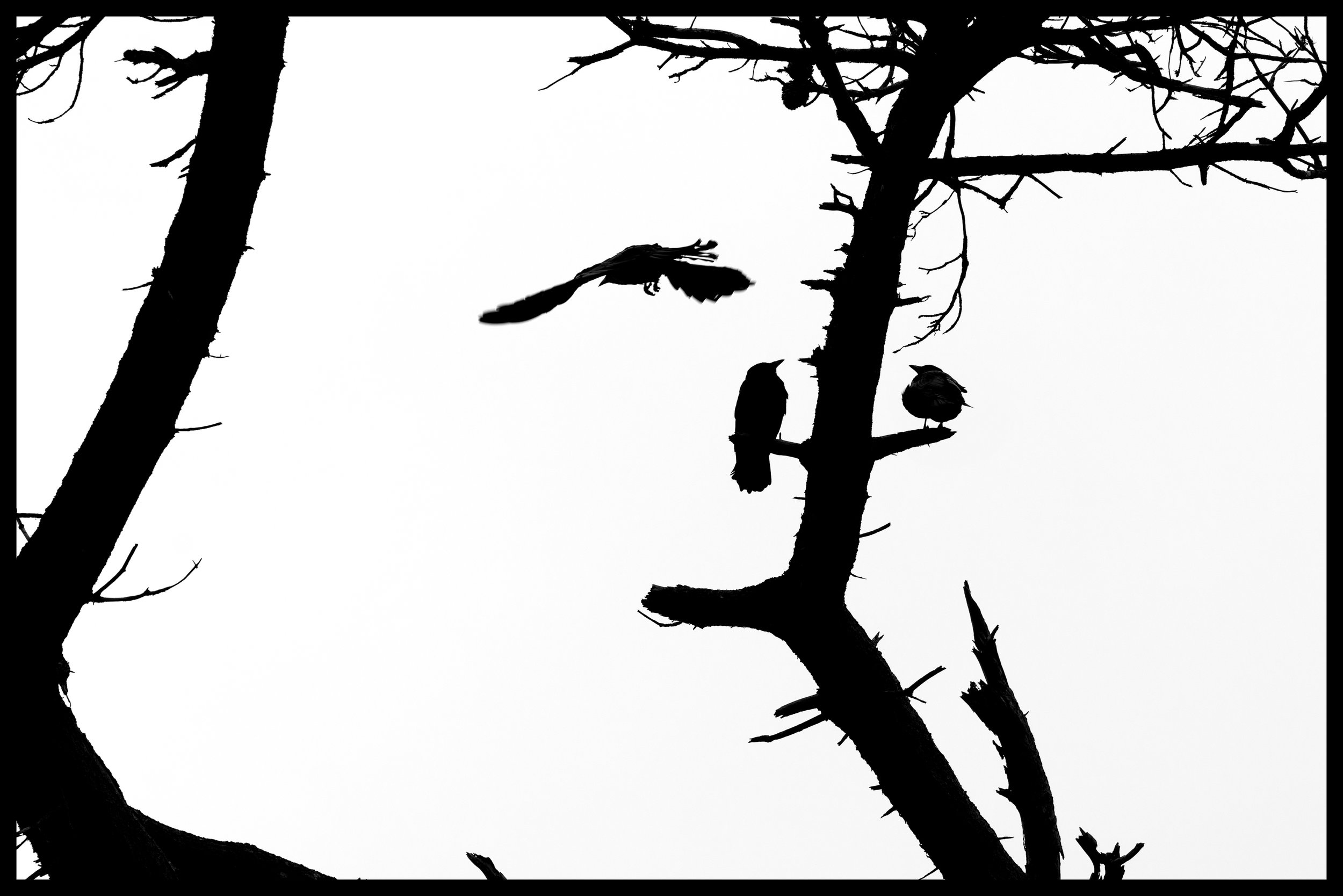 _SIA2516-Edit-Edit.jpg