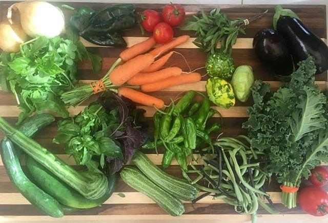 Can't believe we're in week 14 already.  #csafarmshare #urbanfarm #CSAUtah #smallfarm #chronicproduce #soilgifts