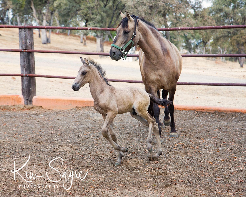 (c)2017-KimSayre-AN-Rancho-Toledano-Colt2-002.jpg