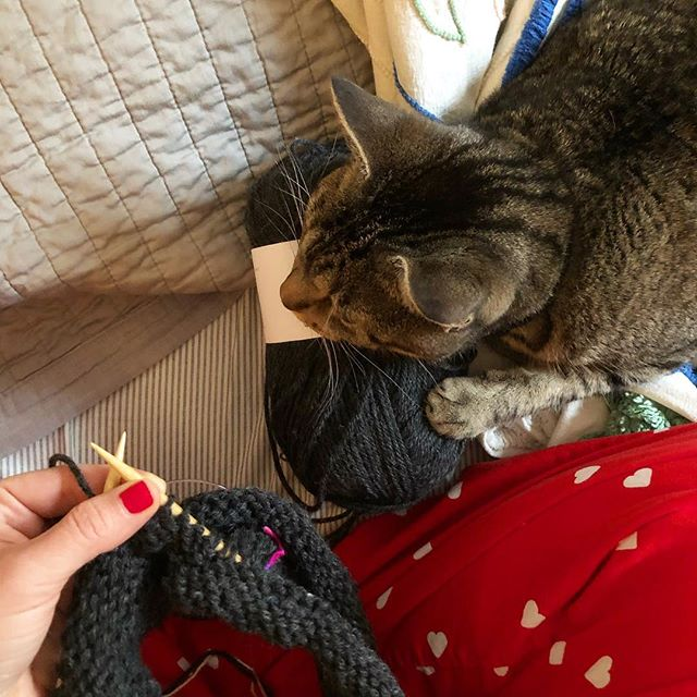 Skein of yarn or cozy cat pillow? 🤔 #catsandyarn