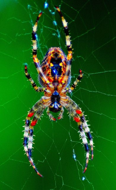 "- ""When is the RGB Redback coming, I'm waiting for that!"" We have learnt a long time ago to never say never, but when you think about the reality of it, is it really feasible? The idea of having RGB on a spider is lovely (the image attests to that), but where do you put all those LEDs? Right now we have created what we think is the ultimate BiColor Soft Light, that makes lighting previous difficult situations a cinch. We have jammed those LEDs so close together on a relatively small piece of real estate, to allow for 3456 lights on a 7lb self supporting frame, no gripping equipment required. To add the color options, the brightness for ALL colors will be reduced, significantly. Is that what we want, or the consumer wants? We don't think so. So for now, the RGB is shelved until further innovation, it just doesn't work with this format."
