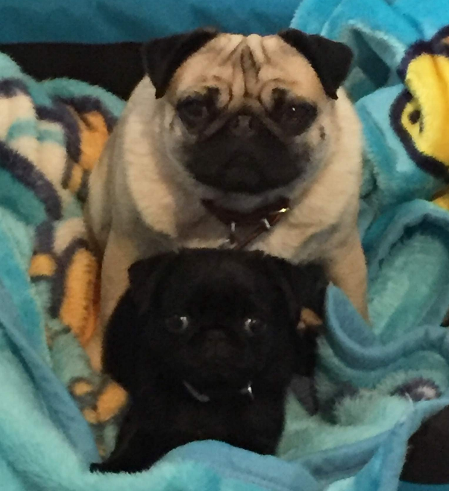 Inseparable Daycare Buddies Winston and Pip.