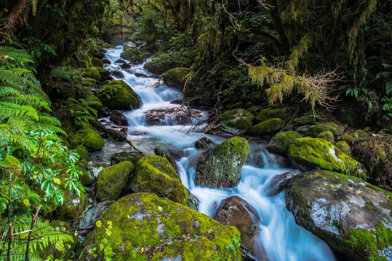 Flowing Creek in Milford Sound