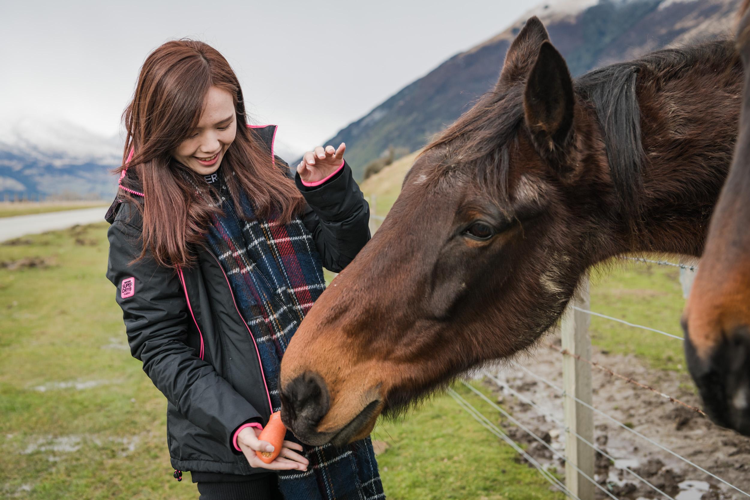 Feeding carrots to horses in Paradise New Zealand