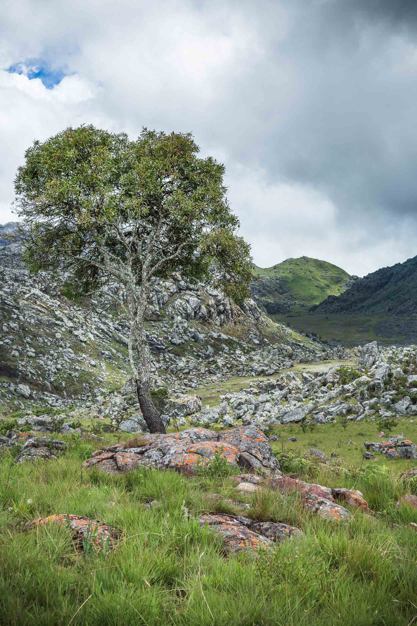 chimanimani-national-park-tree-boulder-field.jpg