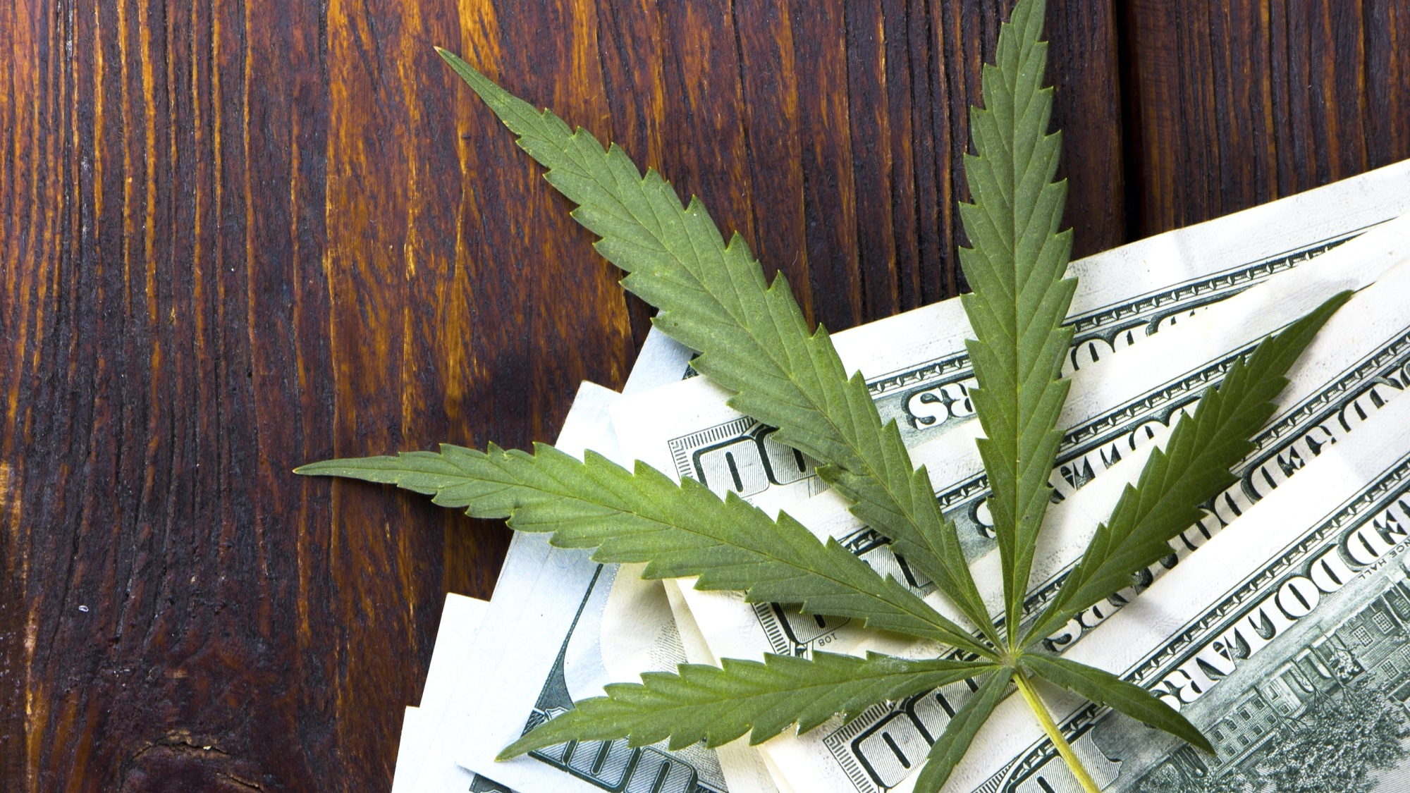 How+to+Find+a+Good+Accountant+for+Your+Cannabis+Company-min.jpg