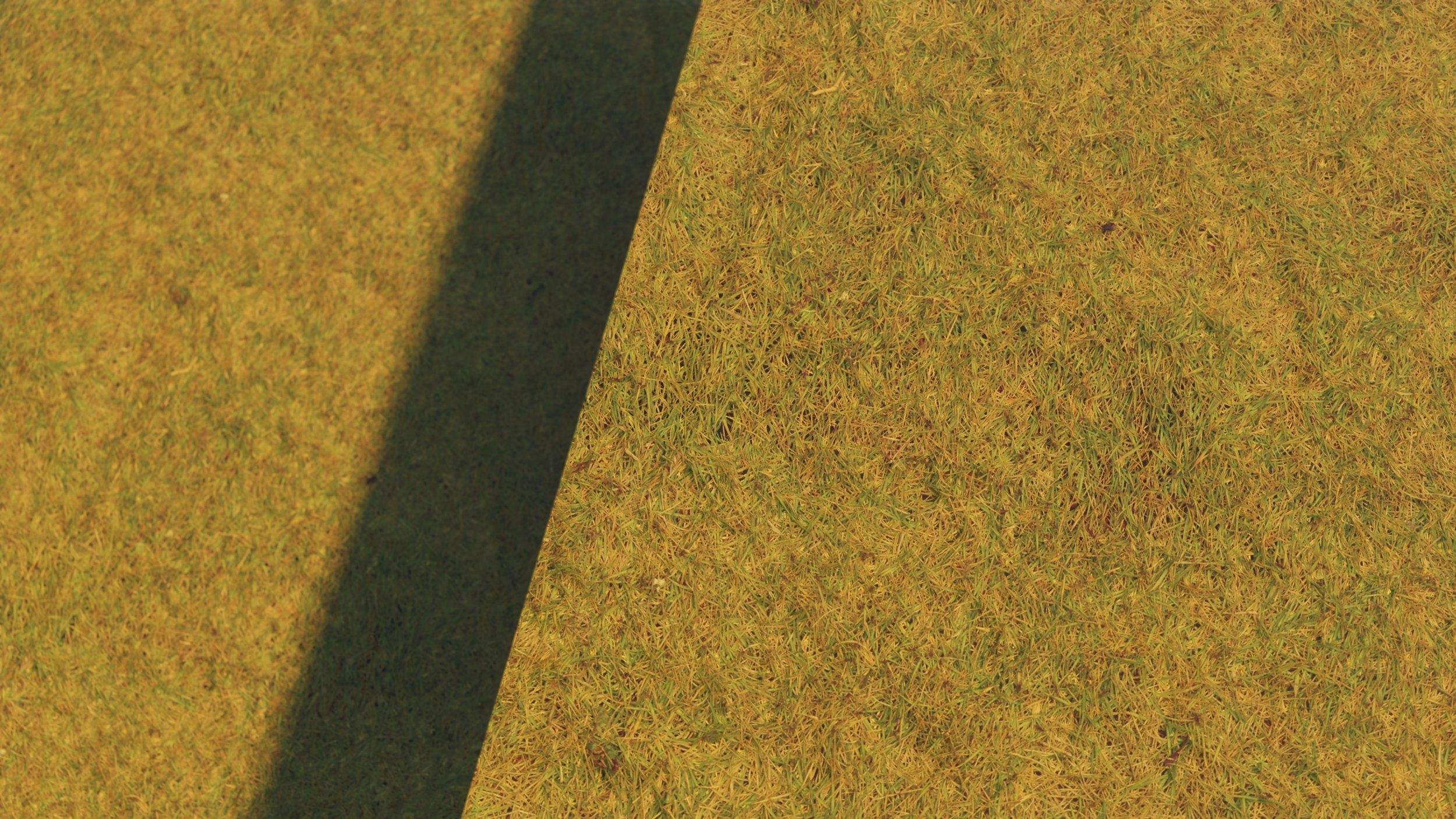 Grass (2).jpg
