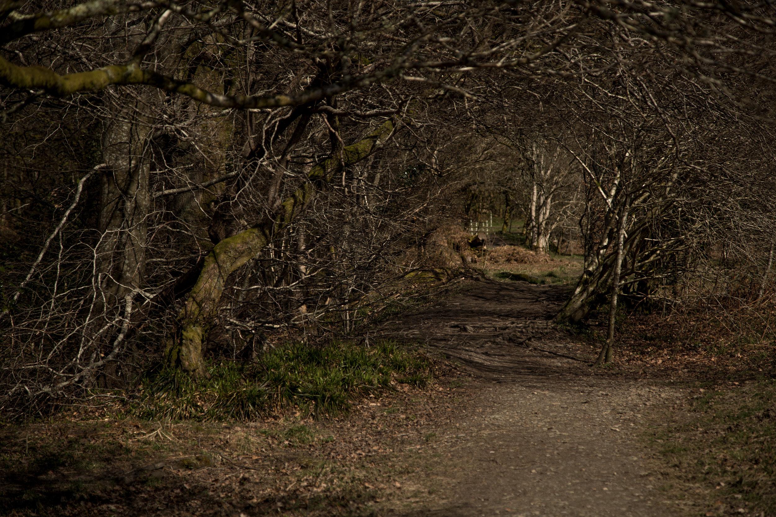 180401-Helensburgh-028.jpg