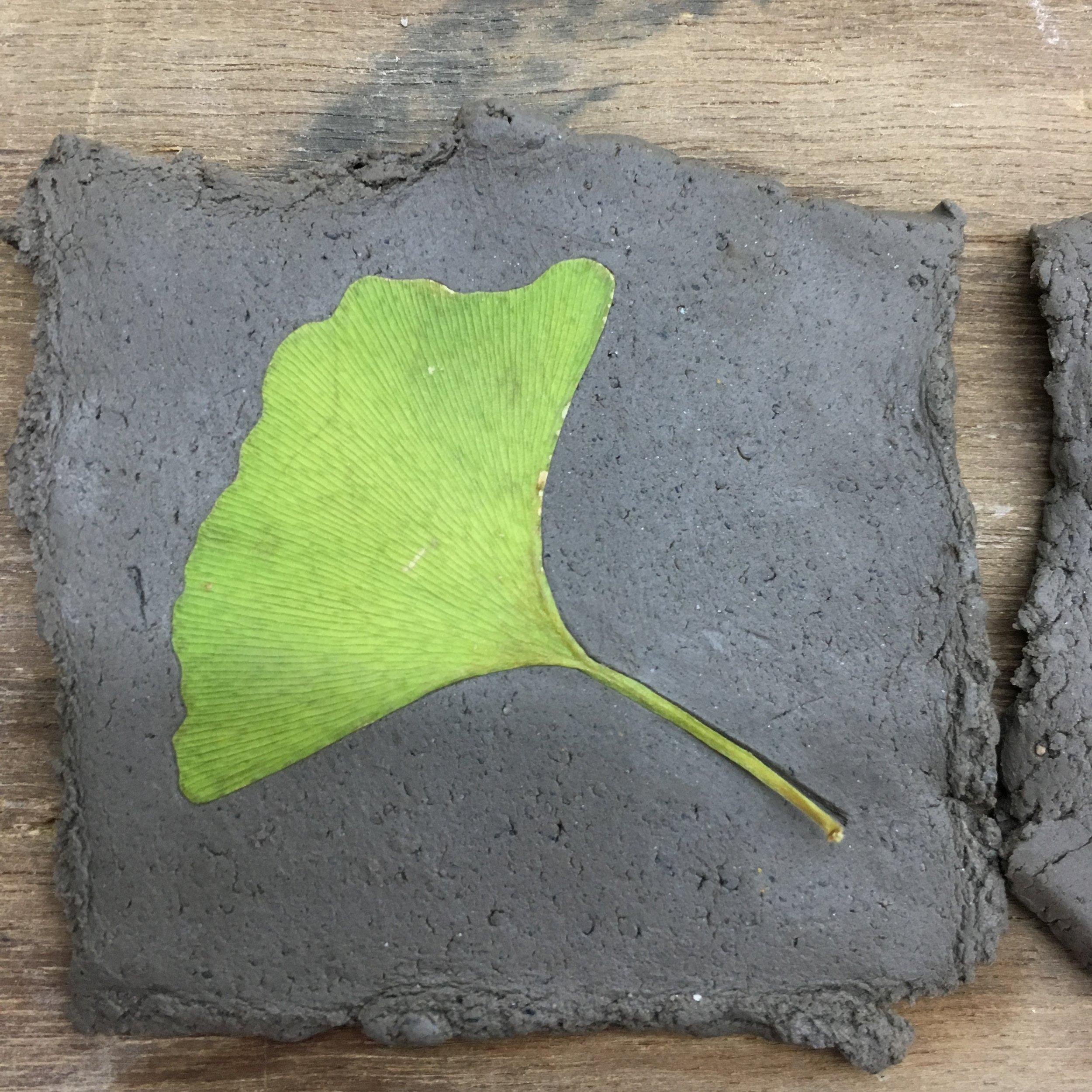 First Hibaku-Jumoku samples for test firing on Japanese clay.