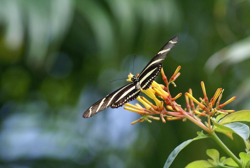 aruba2010 157.JPG