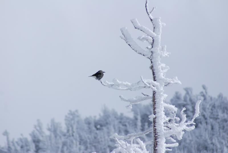 birdsnow.jpg