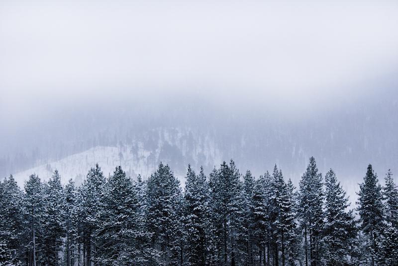 fog(2).jpg