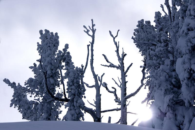 snowtree4.jpg