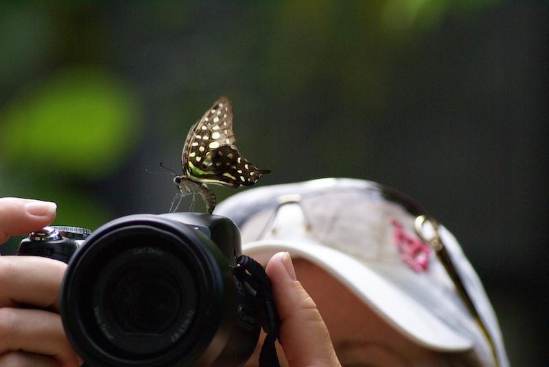 aruba2010 066.JPG