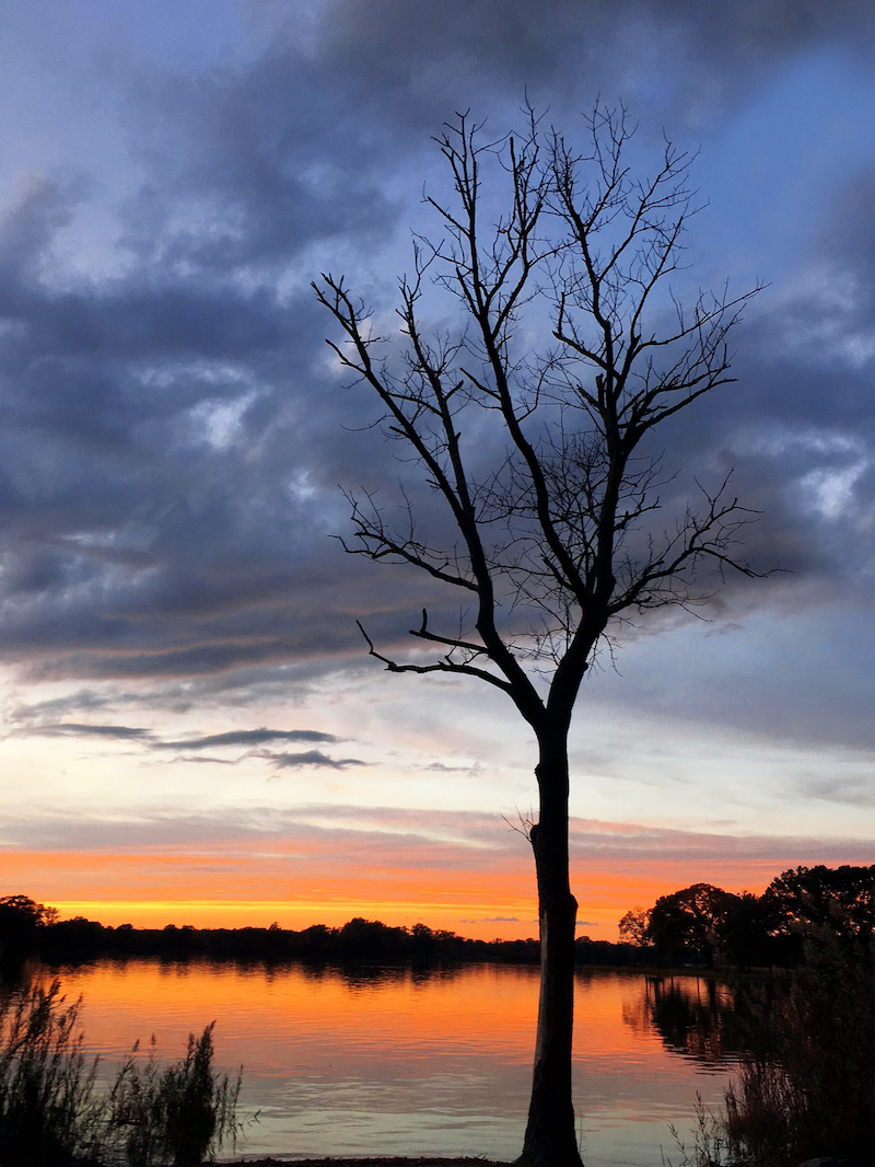 tree(2).jpg