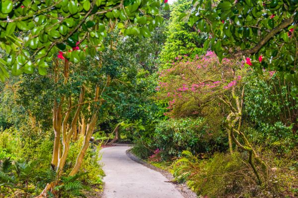 Lost-Gardens-of-Heligan.jpg