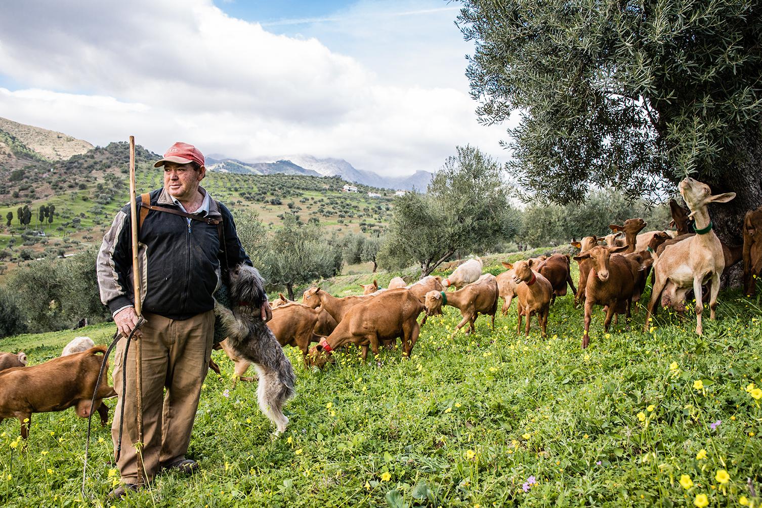 Goat farming, Malaga-3562.jpg