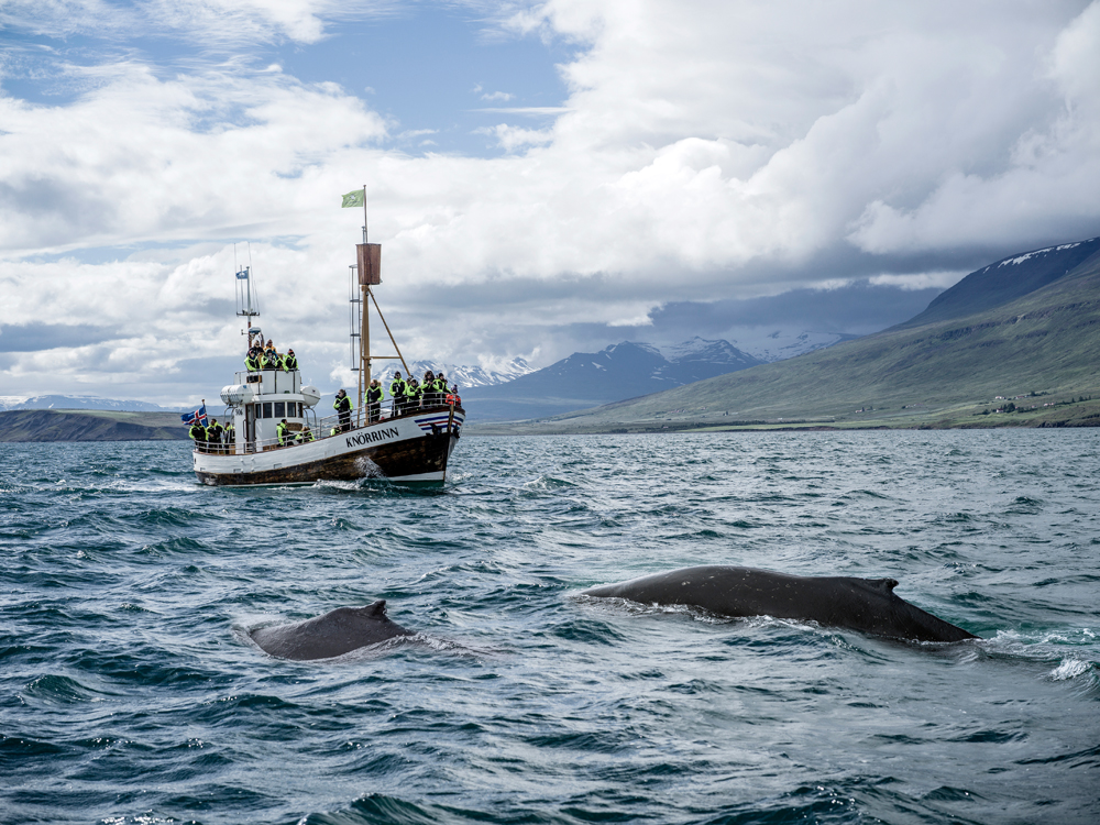 Iceland-0000199.jpg